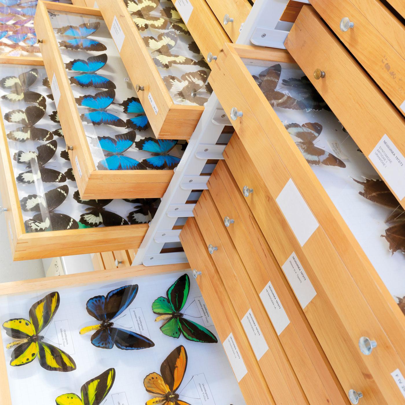 Objektlösung: Holzschubladen